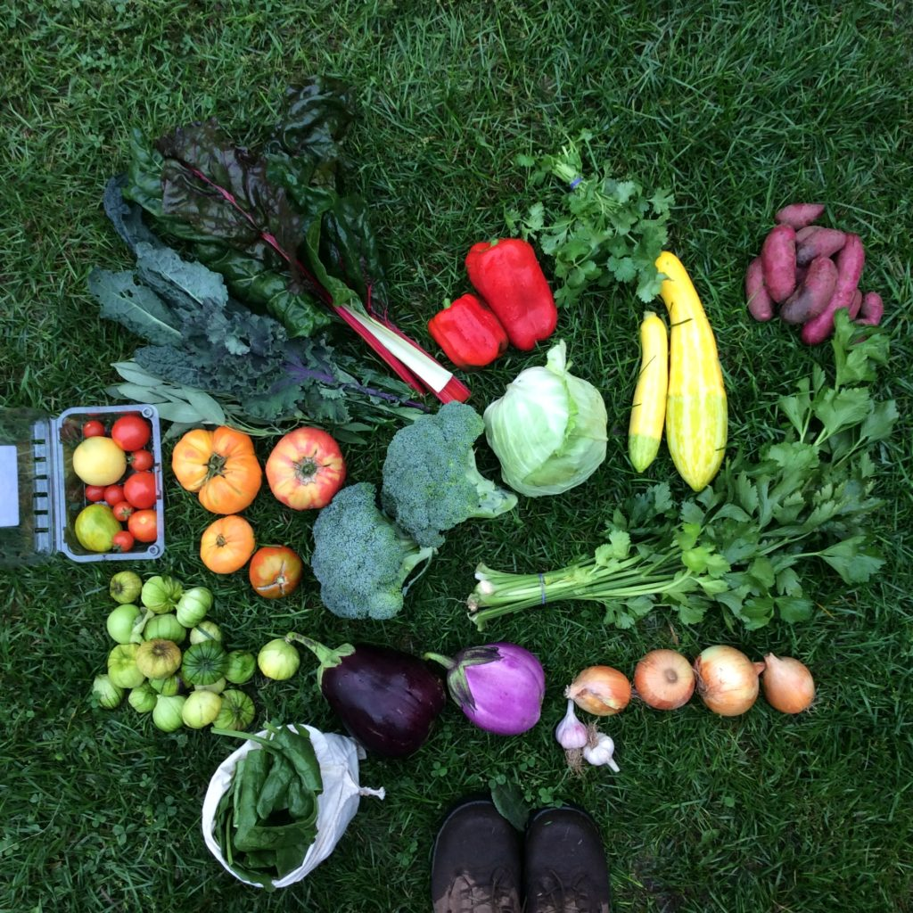 bountiful array of vegetables on the grass
